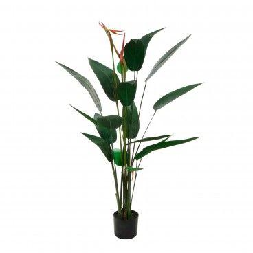 Planta Decorativa Estrelícia