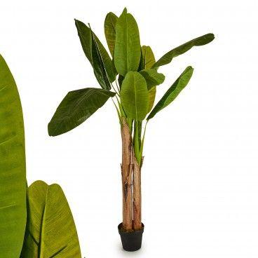 Planta Decorativa Folhas Grandes com 2 Caules