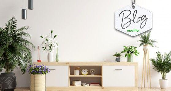 Use e abuse das plantas na decoração da casa: é bonito e saudável!